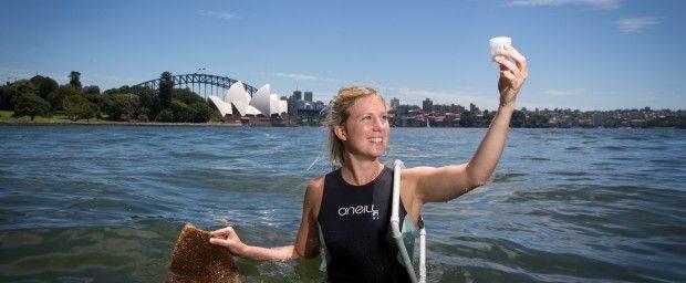 CoS seawall pots _ Marine biologist Rebecca Morris 620x256